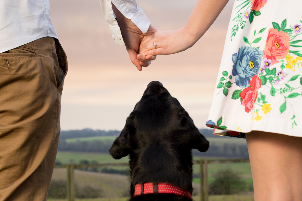 Berkhamsted engagement shoot in Hertfordshire with a black labrador