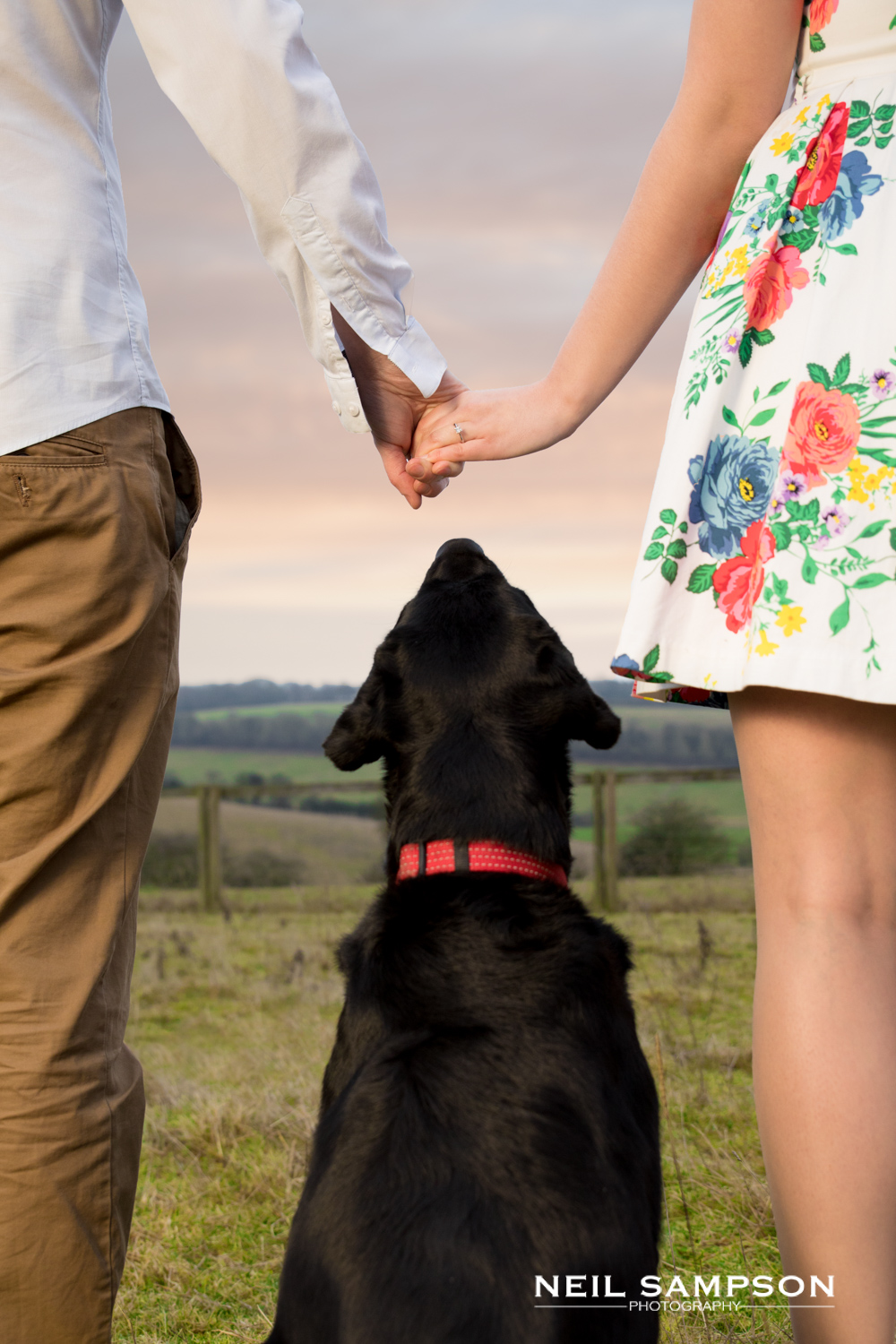An engaged couple hold hands while their black labrador dog looks at their engagement ring